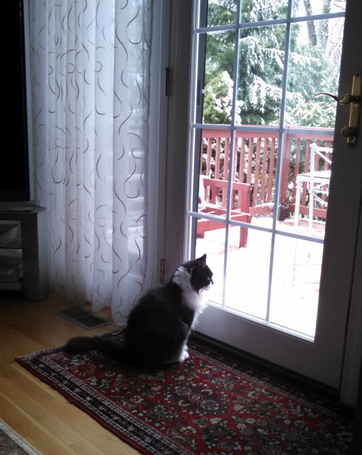 maggie-at-window-1