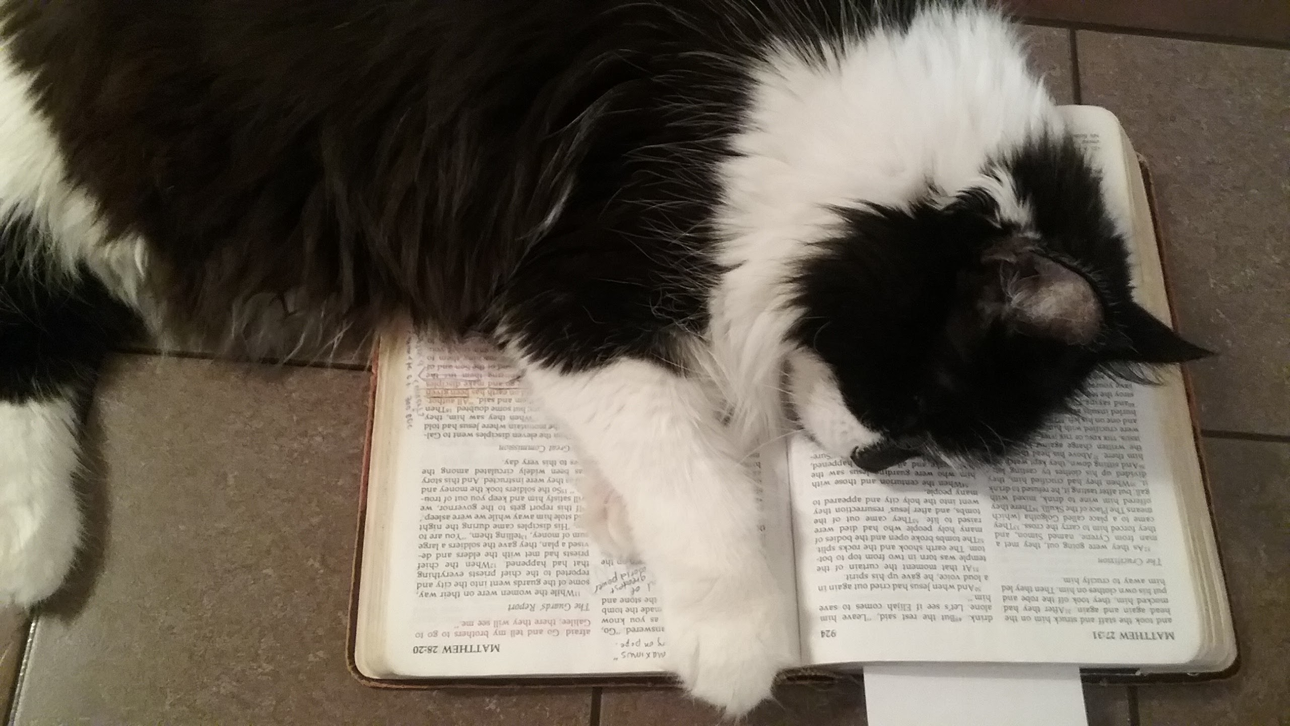 maggie-reads