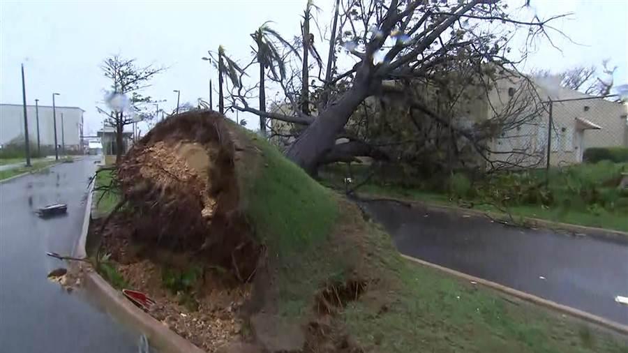 hurricane upheaval, tree